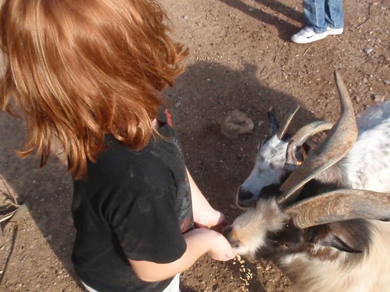 Animals a la granja de Can Castellví