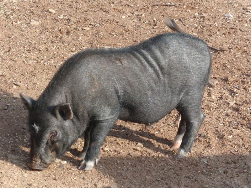 Animals a la gran Can Castellví